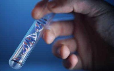 Сколько стоит тест ДНК на отцовство